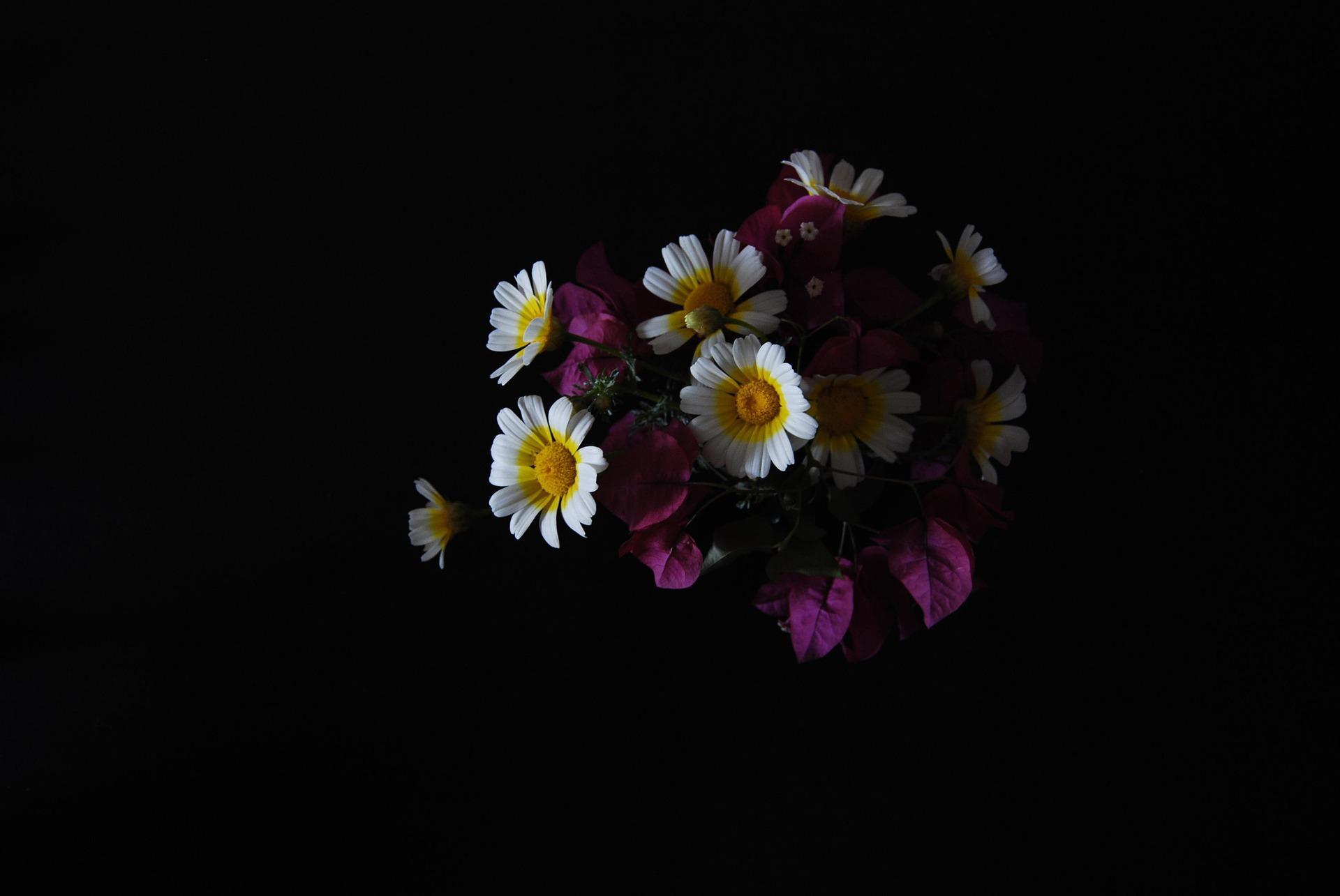 flowers nachoto7 Pixabay